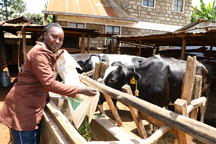 Forage Genetics International and Land O'Lakes Venture37 Join with Corteva Agriscience to Create Alliance in Kenya to Address Persistent Dairy Shortages Through Improved Livestock Nutrition